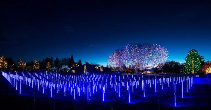 Blossoms Of Light Is The Best Winter Lights Display In Denver