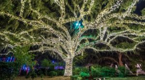 The Winter Walk In South Carolina That Will Positively Enchant You