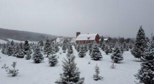 9 Magical Christmas Tree Farms To Visit Near Buffalo This Season