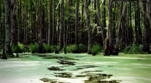 5 Amazing Swamp Tours Near New Orleans That'll Lead You To Incredible Views