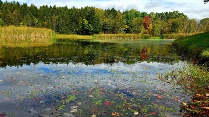 Horseshoe Pond Is The Most Enchanting Hike In The Cvnp