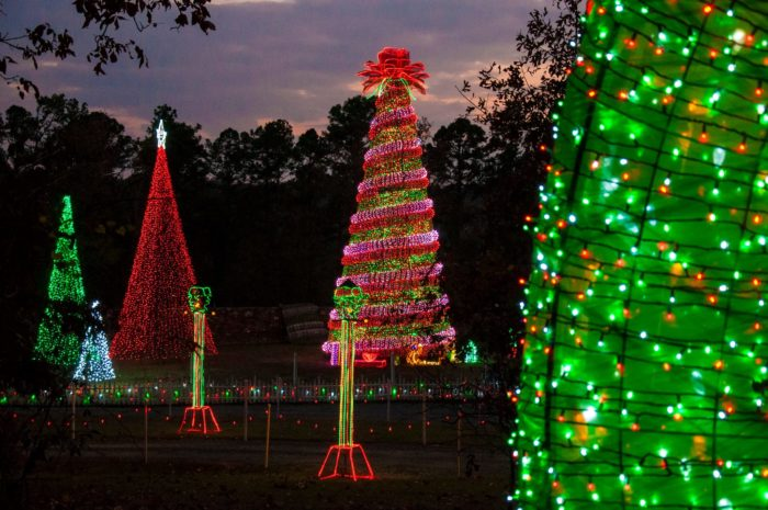 next along the light tour will be the rose tree facebookgarvan woodland gardens - Garvan Gardens Christmas Lights