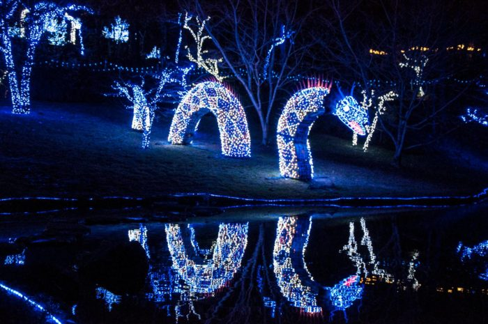 Garvan Gardens Holiday Lights Walk Will Enchant You In
