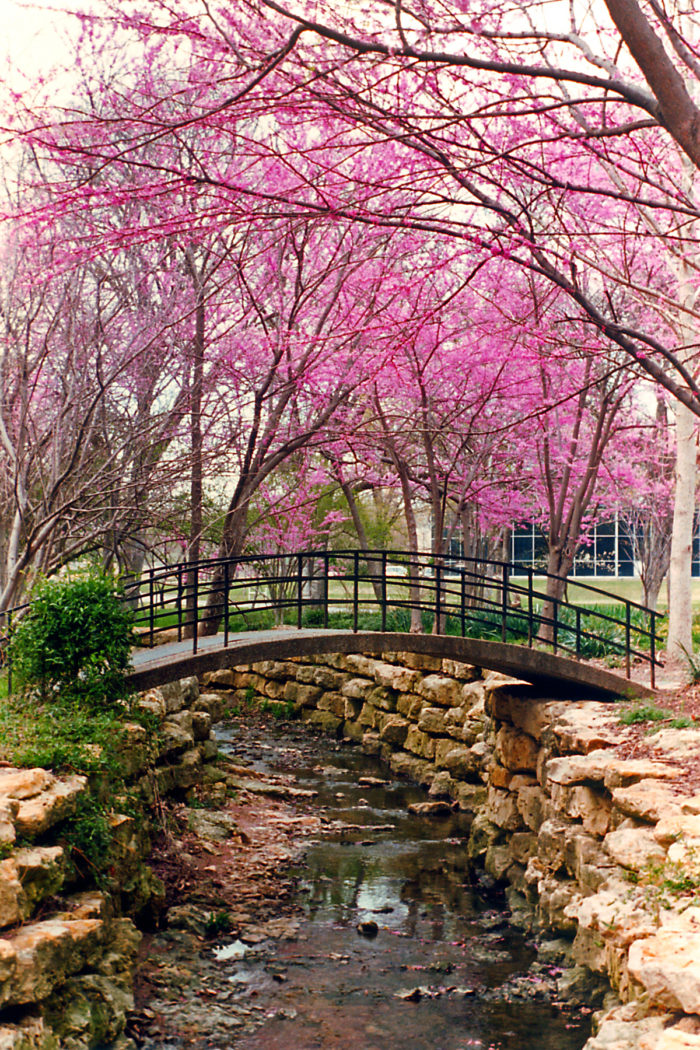 The 20 Most Beautiful Places In Dallas Fort Worth