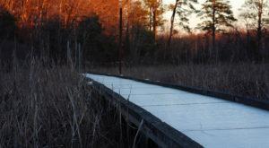 This Easy Boardwalk Hike Belongs On Every Virginians Adventure Bucket List