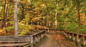 7 Of The Greatest Hiking Trails On Earth Are Right Here In Pittsburgh
