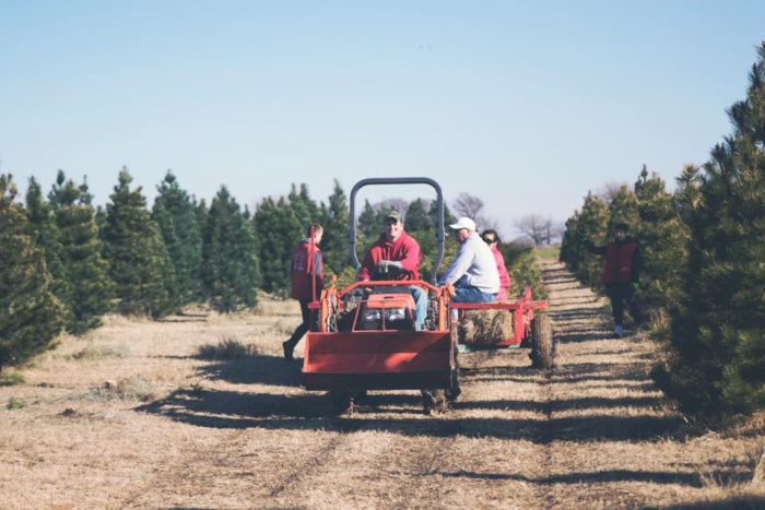 4 C Choose & Cut - 11229 E Creed St., Wichita, Kansas. 4 C Choose & Cut Christmas  Tree Farm Facebook - 9 Magical Christmas Tree Farms To Visit In Kansas This Season Only