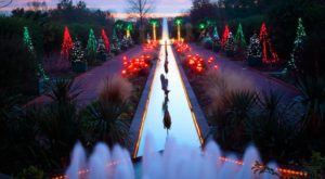The Winter Walk In Charlotte That Will Positively Enchant You