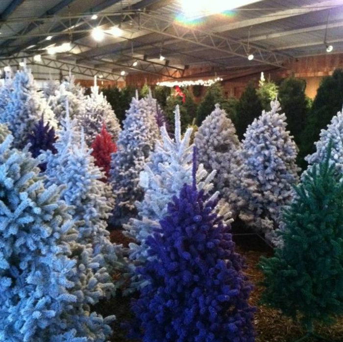 Country Pines Christmas Tree Farms: 9 Magical Christmas Tree Farms To Visit In Kansas This
