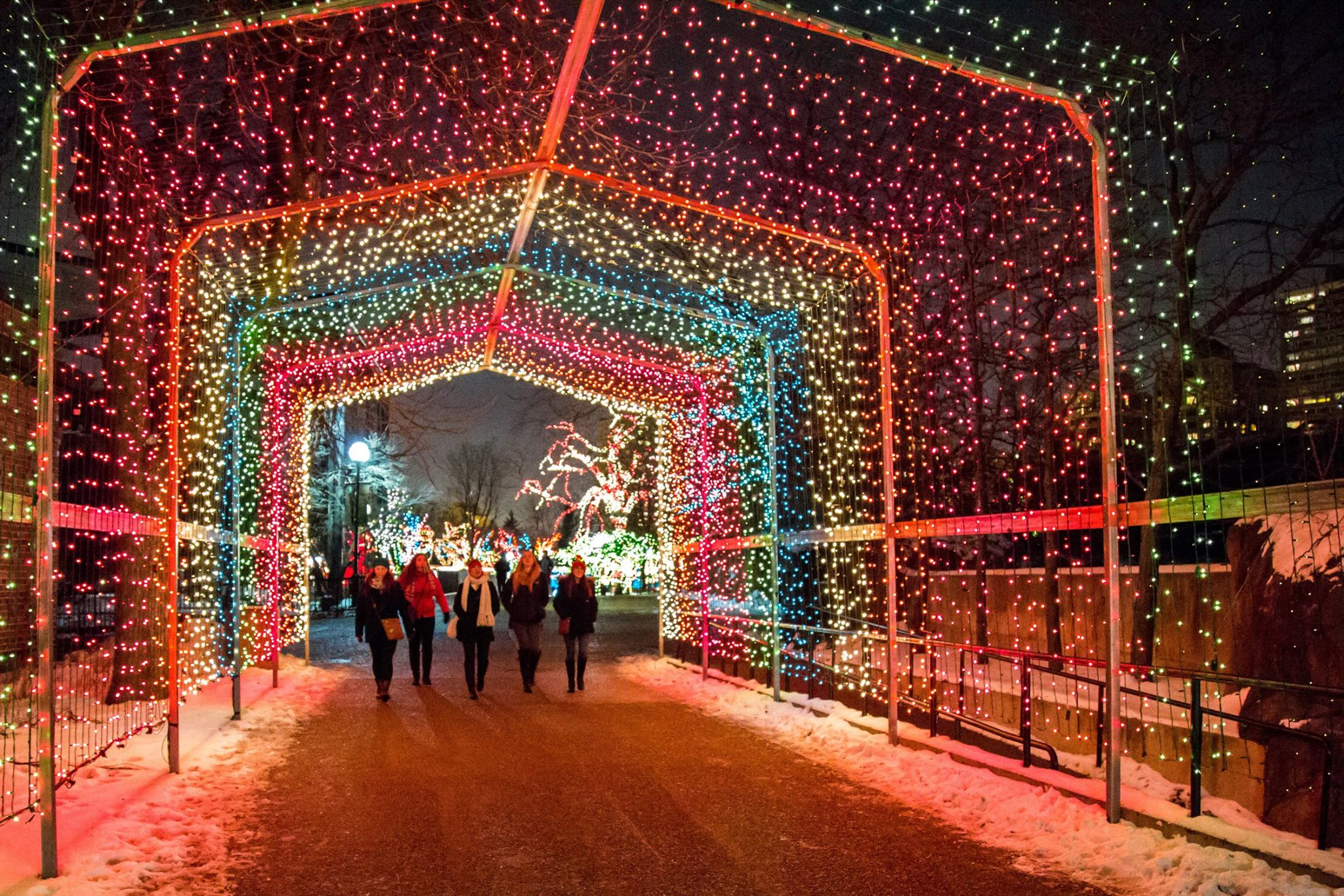 Zoolights Is Best Winter Lights Display In Chicago