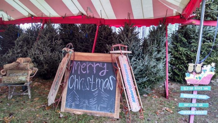 Lazy Spread Christmas Tree Farm - Clarksville - 10 Magical Christmas Tree Farms To Visit In Tennessee This Season
