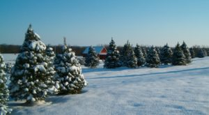 9 Magical Christmas Tree Farms To Visit In Kansas This Season