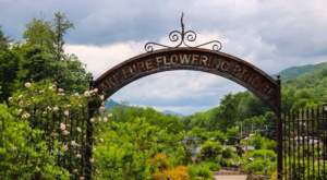 Take A Journey Through This One-Of-A-Kind Bridge Park In North Carolina