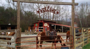 8 One-Of-A-Kind Dinner Adventures You Can Only Have In Georgia