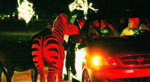 You Won't Want To Miss This Enchanting Holiday Lights Safari In South Carolina