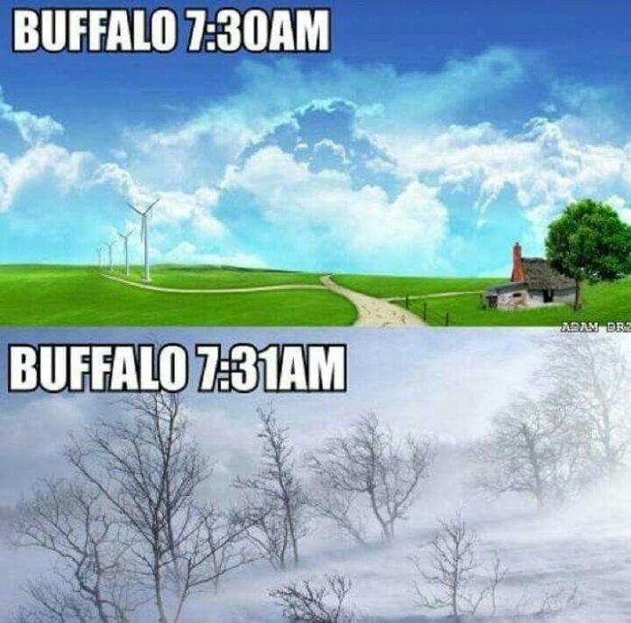 12 best buffalo memes