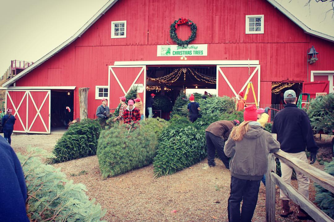 - Dull's Tree Farm Is The Best Place To Get Your Christmas Tree In Indiana
