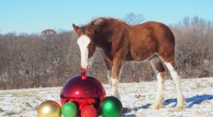 This Christmas Farm In Missouri Will Positively Enchant You This Season