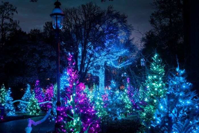 The Garden Glow Path Runs Approximately 1.3 Miles, And The Experience  Generally Lasts Around 1.5 Hours.