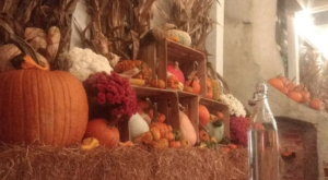 This Pumpkin Patch Patio In DC Is All You Need For Fall