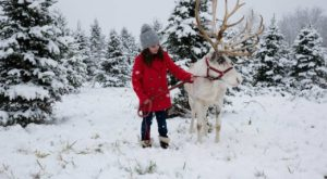 This Reindeer Farm In Indiana Will Positively Enchant You This Season