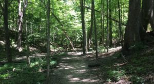 7 Incredible Hikes Under 5 Miles Everyone Around Indianapolis Should Take