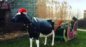 This Christmas Farm In Indiana Will Positively Enchant You This Season