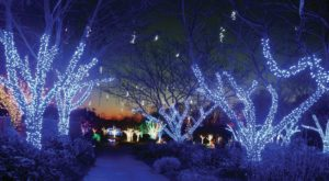 The Winter Walk In DC That Will Positively Enchant You