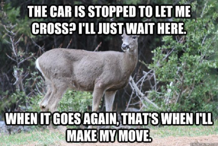 Funny Memes When You Re Sick : Funny pictures of the day pics