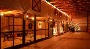 This Reindeer Farm In Texas Is Positively Enchanting
