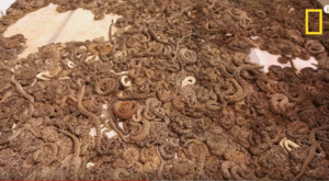 This Rattlesnake Festival In Texas Is One Of The Largest Of Its Kind In The World