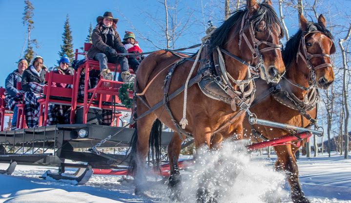 These Are The 6 Best Horse Drawn Sleigh Rides Around Denver