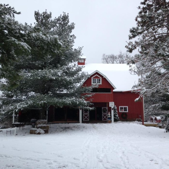 Christmas Tree Farms In Wisconsin