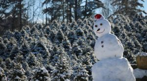 11 Magical Christmas Tree Farms To Visit In New Hampshire This Season