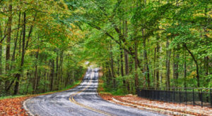 7 Roads With The Best Windshield Views In All Of South Carolina