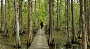 These 7 Trails In Louisiana Are Easy To Hike Year Round