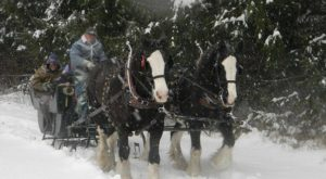 The Unforgettable Sleigh Ride Near Pittsburgh That's Perfect For A Winter Day