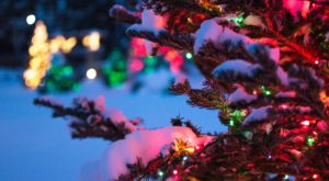 The Spot In South Dakota That Turns Into An Enchanting Holiday Garden Every Year