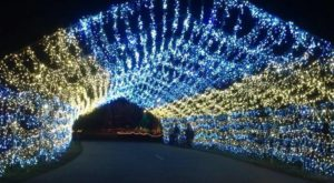 Michigan's Tunnel Of Lights Will Positively Dazzle You This Year