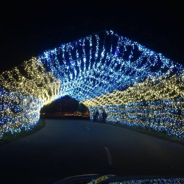 Christmas Lite Show Is Best Christmas Tunnel In Michigan