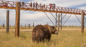 There's A Wildlife Park Near Denver That's Perfect For A Family Day Trip