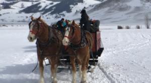 Make Memories To Last A Lifetime On This Wyoming Winter Safari