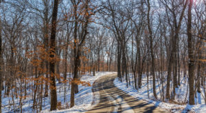 The One Snow-Covered Trail In Minnesota That You Have To Hike This Winter