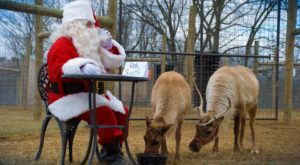 This Reindeer Farm Near Philadelphia Will Positively Enchant You This Season
