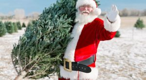 The One Magical Christmas Tree Farm To Visit Near Denver