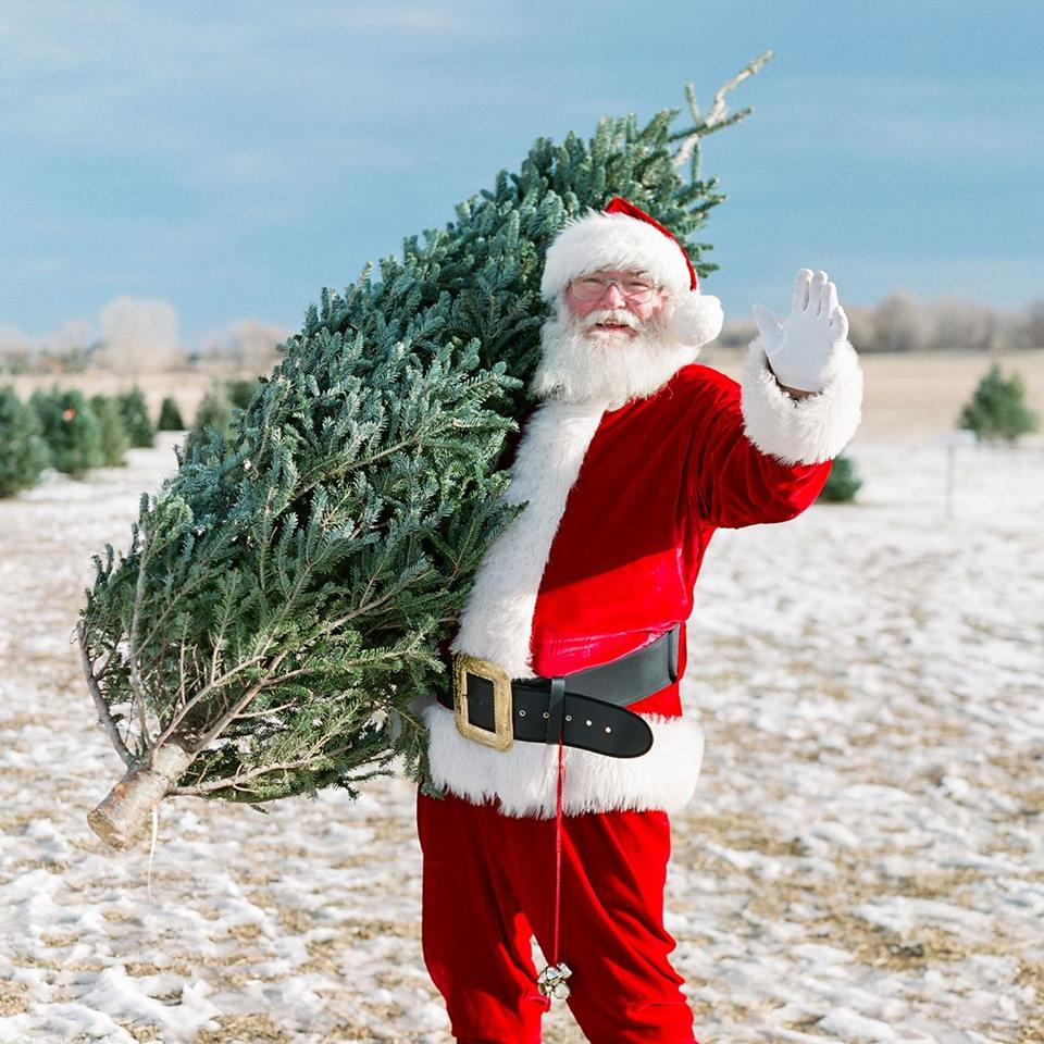 Cut Your Own Christmas Tree At Creekside Tree Nursery Near