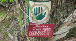 You'll Want To Stay Far, Far Away From The Deadliest Tree In The U.S.
