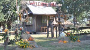 This Christmas Farm In Louisiana Will Positively Enchant You This Season