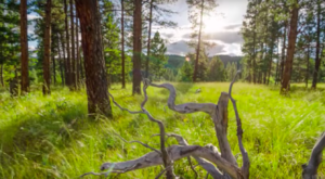 This Amazing Timelapse Video Shows Montana Like You've Never Seen it Before