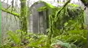 Nature Is Reclaiming This One Abandoned Washington Spot And It's Actually Amazing